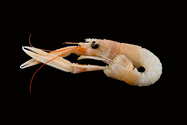 Servizi fotografici food di pesce crudo su fondo neutro nero